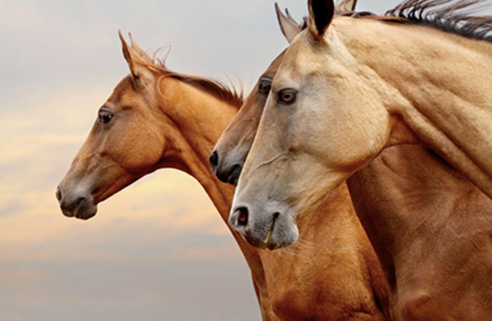 assurances chevaux + frais veto + invalidité