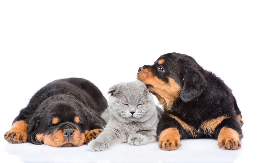 assurance santé chien et chat